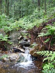 葦毛湿原1.png